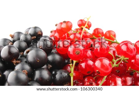 black and red currant isolated on white background - stock photo
