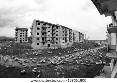 Black and white abandoned block of flats under construction. Brick and cement textures with grass around it and sheep