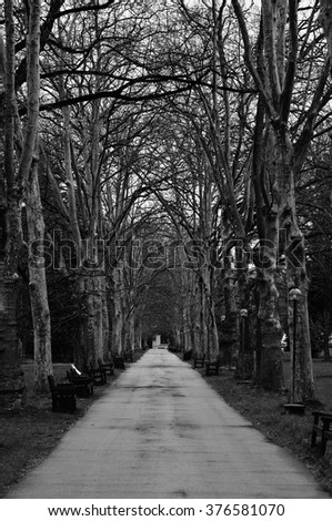 black and white abstract landscape with park path, vertical wood ghostly background