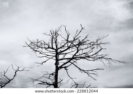 Black and white abstract of Bare tree branches /  Bare tree branches - stock photo