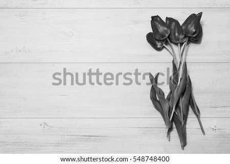 Black and white art photography monochrome, tulips on a light wooden background. Spring flowers