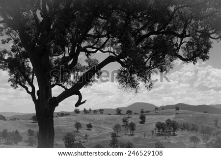 Black and white Australian landscape