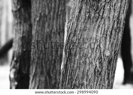 Black and white bark - stock photo