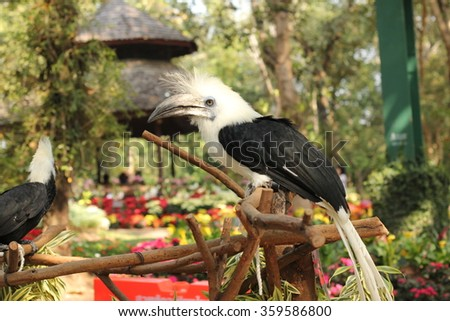 black and white bird sitting on a tree branch - stock photo