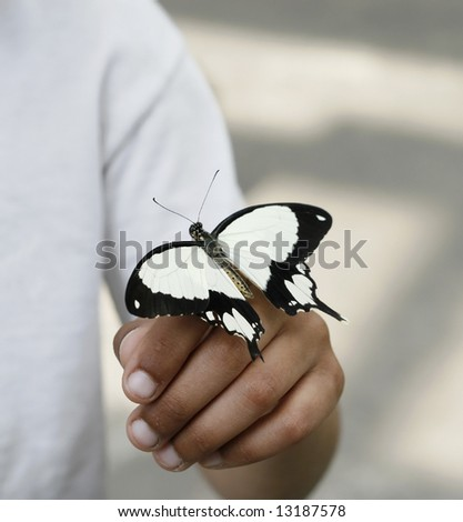 Black and white butterfly on a hand - stock photo