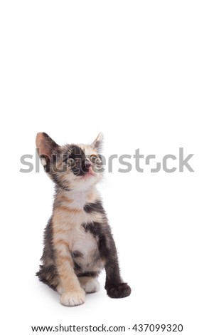 Black and white cat and black kitten use cat eye looking on white background - stock photo