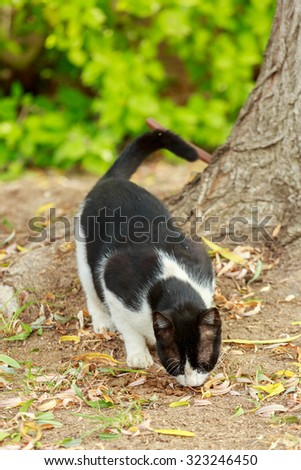 Black and white cat eats cats food from a ground