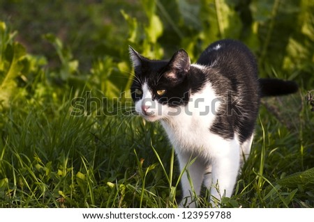 black and white cat in the grass - stock photo