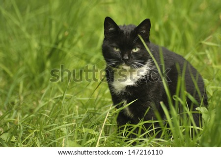 Black and white cat in the green grass. - stock photo
