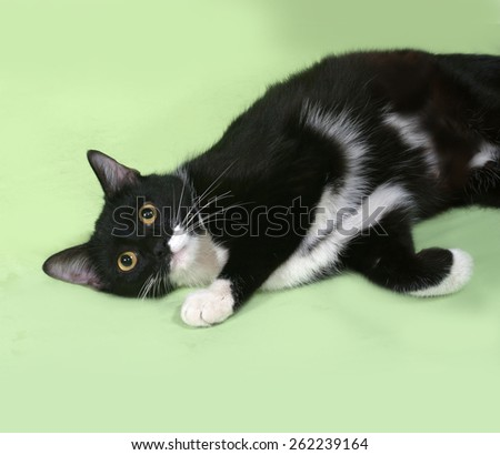 Black and white cat lies on green background