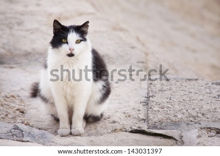 Black and white cat looking at camera with yellow eyes