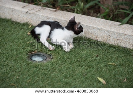 Black and white.cat lying on green grass, Big, happy cat lying on the ground, among the green grass. striped, smooth-haired. Beautiful cat resting  - stock photo