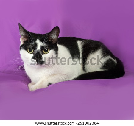 Black and white cat lying on lilac background - stock photo