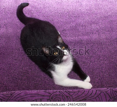 Black and white cat lying on purple couch