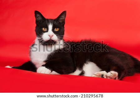 Black and white cat lying on red background