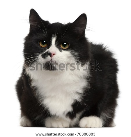 Black and white cat, 5 months old, sitting in front of white background - stock photo