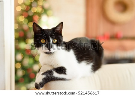 black and white cat on a sofa in a Christmas interior