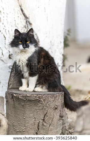 Black and white cat on a stump/ Domestic cat sitting on a stump/ Black and white domestic cat sitting on a stub