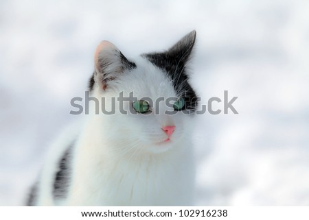 Black and white cat on snowy white background - stock photo