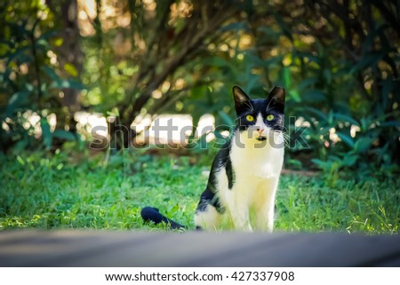 Black and white cat on the green grass in the backyard. - stock photo