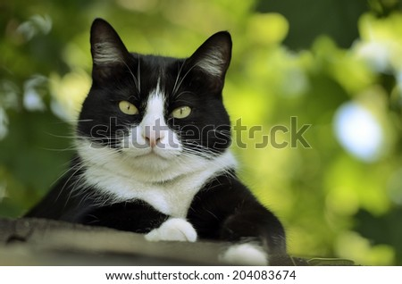 black and white cat on the roof  look at camera - stock photo