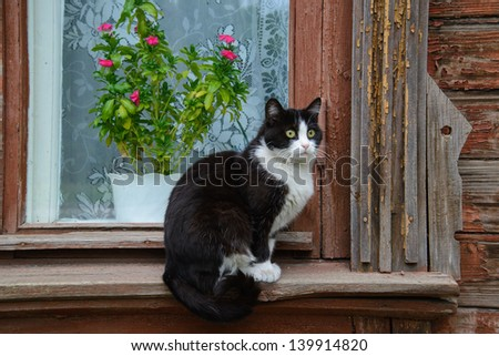 Black and white cat on the window of wooden house - stock photo