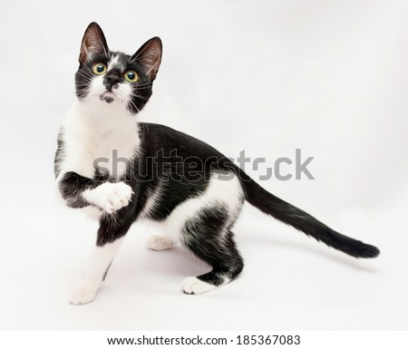 Black and white cat paw frightened flaps on gray-white background