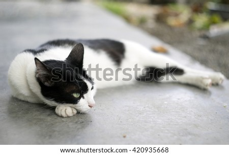 Black and white cat relaxing on the floor - stock photo