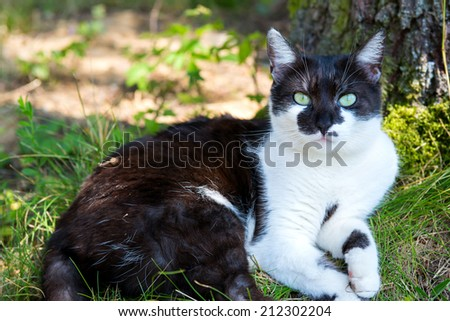 Black and white cat resting in the grass.