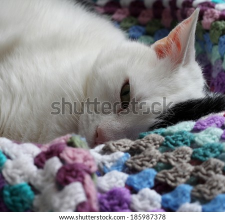 black and white cat, resting  on colorful vintage crochet blanket, cute and resting, an open eye looking straight at camera , shallow depth of field  - stock photo