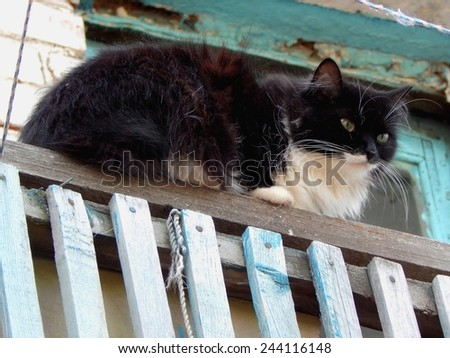 Black-and-white cat resting on the fence. - stock photo