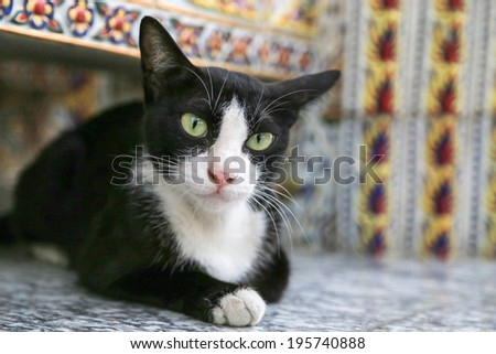Black and white cat sit