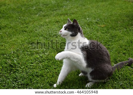 Black and white cat sitting in the grass and lifted a paw up