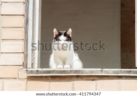 black and white cat sitting in the window