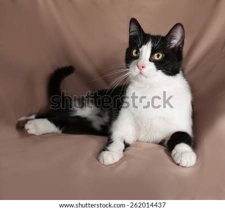 Black and white cat sitting on brown background