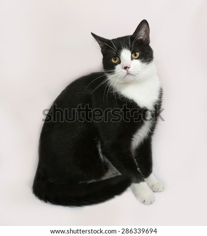 Black and white cat sitting on gray background - stock photo