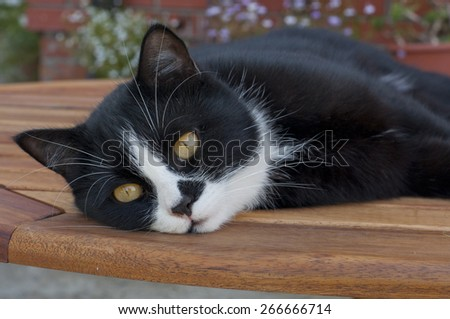 black and white cat sleeps on a table outdoors