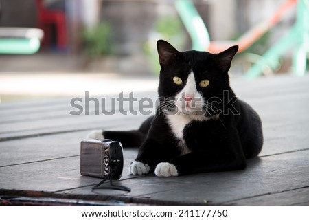 Black and white cat with camera on a wooden table  - stock photo