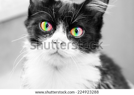 Black and white cat with rainbow eyes looking at the camera - stock photo