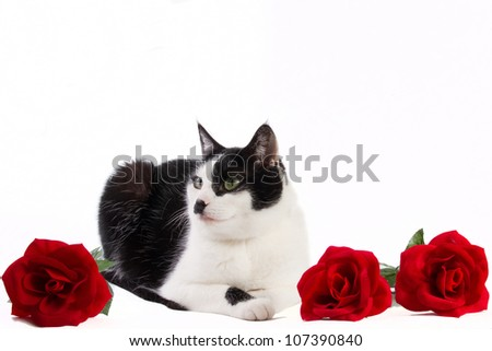 Black and white cat with roses