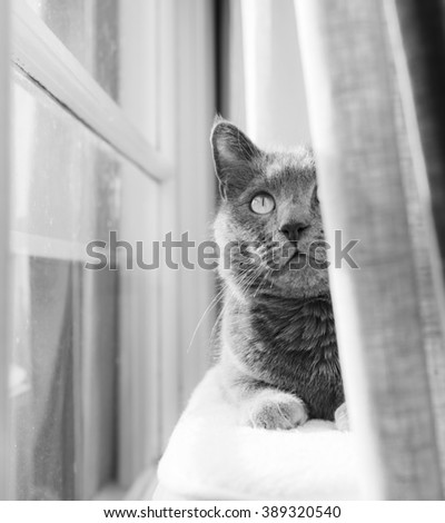 Black and White Close up of a Gray Cat Relaxing on Cat Tree by Window - stock photo