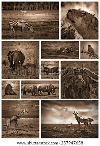 Black and white collage of african safari coloured with sepia - stock photo