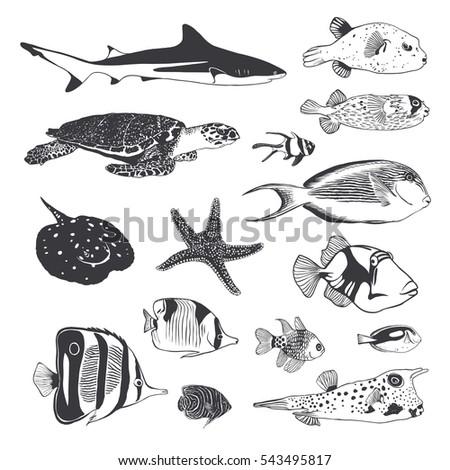 Globefish coupon