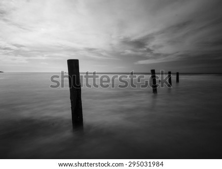 Black and white color of wood stump at the beach