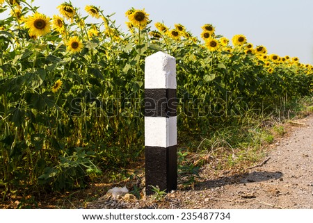 Black and white concrete pillars beside roads with many sunflowers.