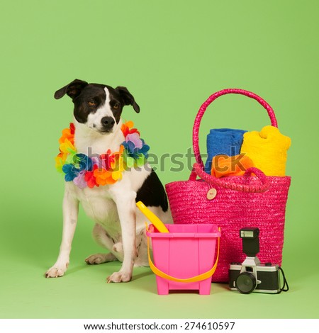 Black and white cross breed dog on vacation at green background