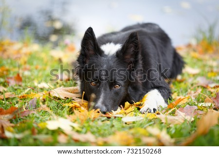 Black and white dog