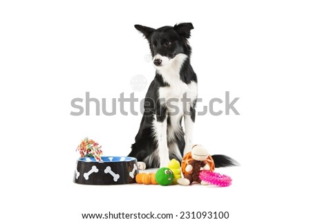 Black and white dog border collie that look soap bubbles with colored dog toys - stock photo