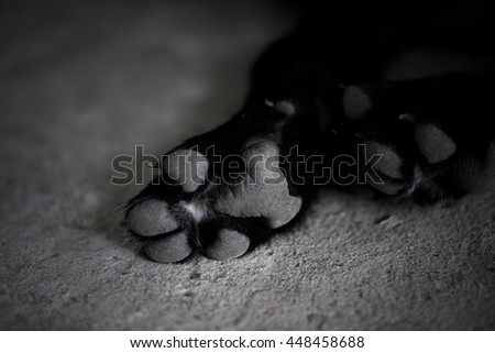 Black and white dog paw pads. Close-up view. - stock photo