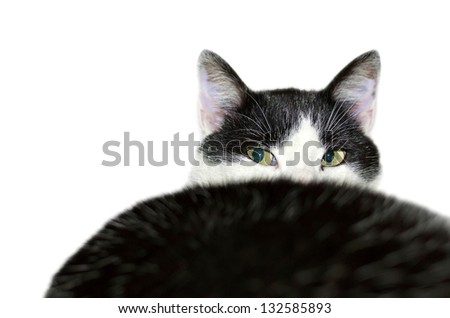 black and white domestic cat head close up